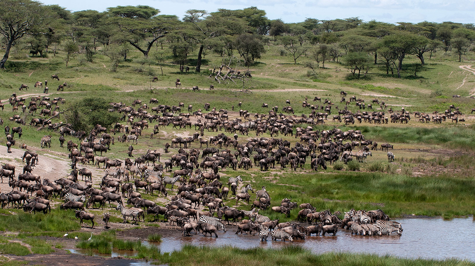 Olaado Camp - Amidst the great migration